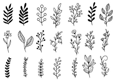 collection forest fern eucalyptus art foliage natural leaves herbs in line style. Decorative beauty elegant illustration for design hand drawn flower Vettoriali