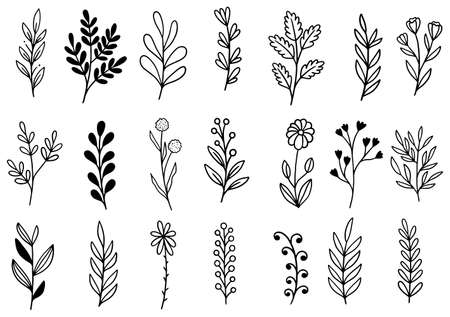 collection forest fern eucalyptus art foliage natural leaves herbs in line style. Decorative beauty elegant illustration for design hand drawn flower 向量圖像