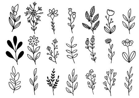 collection forest fern eucalyptus art foliage natural leaves herbs in line style. Decorative beauty elegant illustration for design hand drawn flower