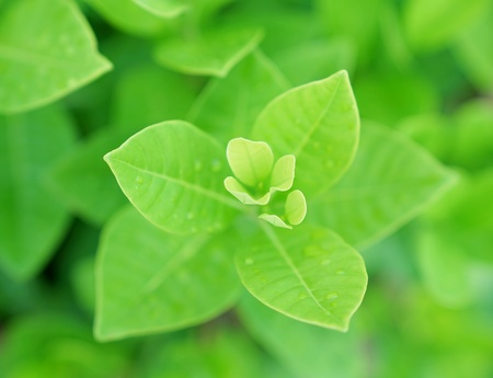 Fresh green leaf with water drops for background
