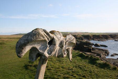 Whale bone photo