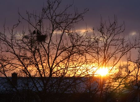 Sunrise on a winter morning with the silhouette of a couple of rooks in a tree Stock Photo - 6347883