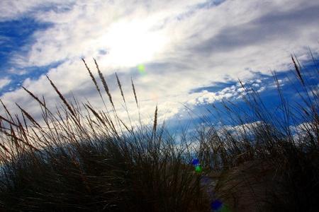 Grass on a Sunny Beach, Portugal Stock Photo - 10564461