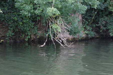 Vegetation along the Saone river in France