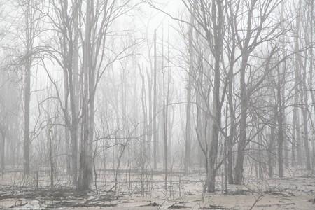 안개 속의 나무들 스톡 콘텐츠