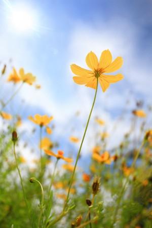 정원사의 꽃 스톡 콘텐츠