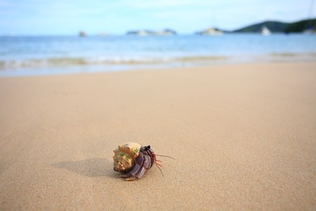 A Hermit Crab walking on a beach  Stock Photo