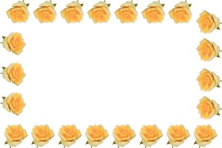 yellow rose frame on white background  photo