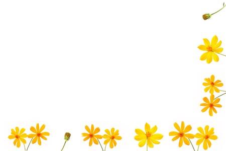 흰색 backgroud에 노란색 꽃 fram