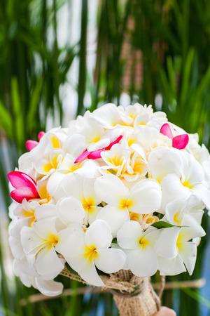 Flower Bouquet of Plumeria photo