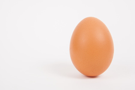 Single  chicken egg  on white  paper background Stock Photo