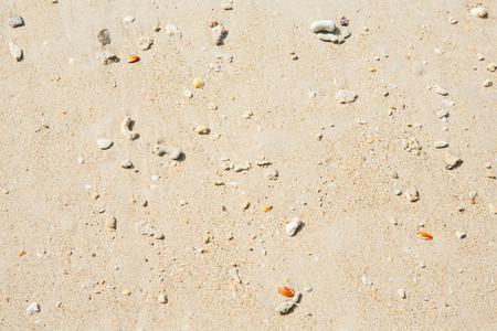 sand texture: Sand texture and seashells background