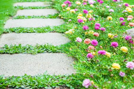stones with flower: Pathway with gardening blooms