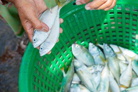 phuket food: Fresh Fish on a Market on Phuket Stock Photo