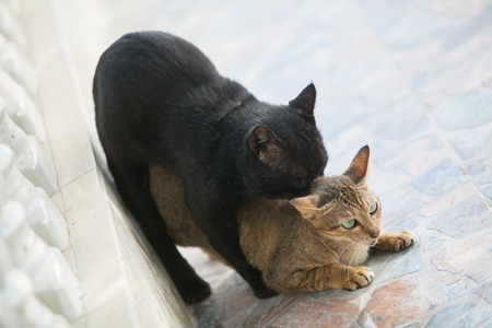 cute kittens: Two cute kittens playing Stock Photo
