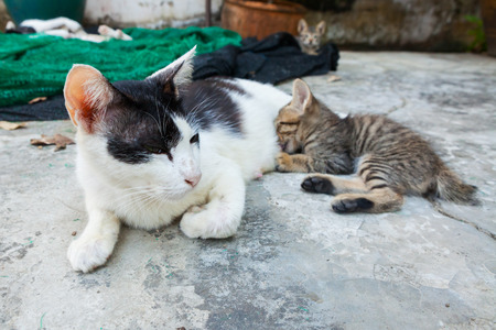 cat lying on the floor and feeds the kitten