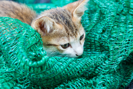 yell: Kitten playing with a mesh that was put aside.
