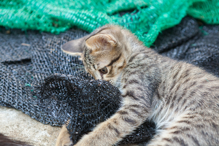 Kitten playing with a mesh that was put aside.