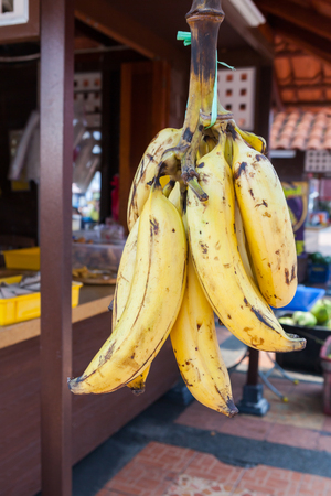 merchant: Fresh Ripe Bunch of Bananas hanged for sale.