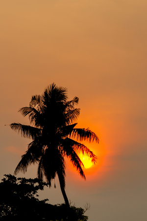 Dark silhouettes of trees and amazing cloudy sky on sunset at Malacca, Malaysia.