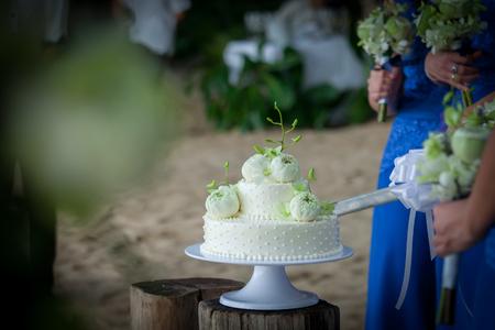 Wedding cutting a wedding cake on wedding day. Stock Photo