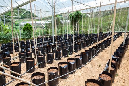 Preparing the site for planting strawberries, berries next series.