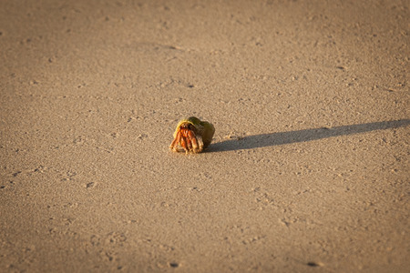Close up of hermit crab walking on the beach.