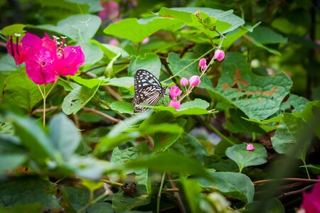 butterfly in the garden at the south of Thailand Imagens