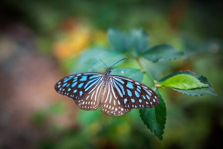butterfly in the garden at the south of Thailand Stok Fotoğraf