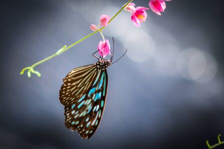 butterfly in the garden at the south of Thailand Banco de Imagens
