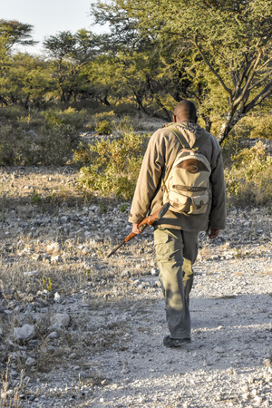 A wildlife guide or ranger taking the lead during a walking safari holding a gun near Etosha Namibia in the bush early morning 免版税图像