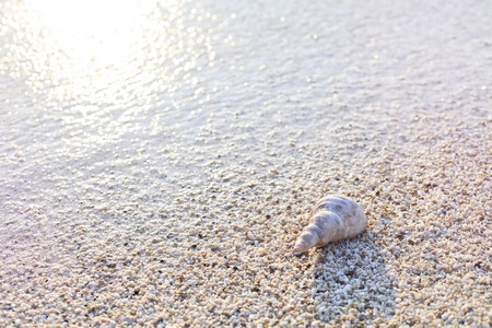 Beautiful shell on a tropical sand beach washed by a wave. Sea sunset. Natural light.