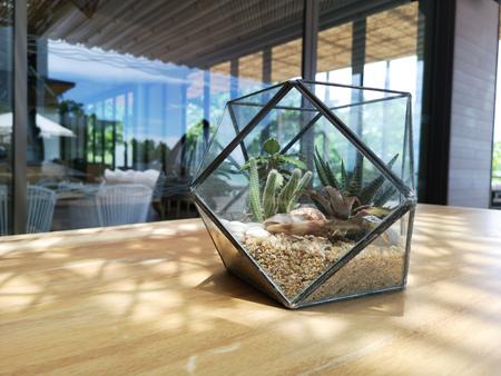 Cacti in an Industrial Glass Hexagon Cactus Terrarium Planter on a table. Natural light. Outdoor.