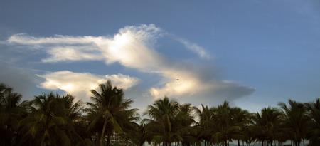 arboleda: Coconut Grove