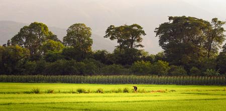 pastoral scenery: Rural pastoral scenery