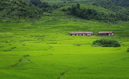 yunnan: Yunnan garden