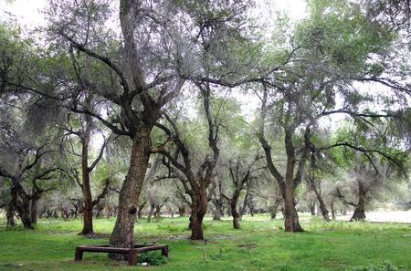 arboleda: Elm Grove