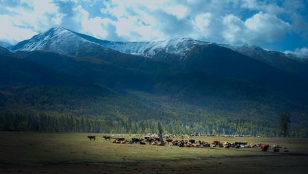 xinjiang: Snow Mountain Ranch