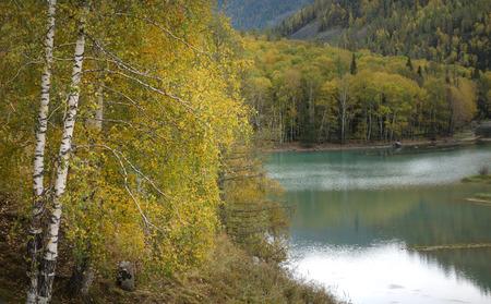 lakeside: Lakeside woods