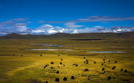 plateau: Plateau pasture