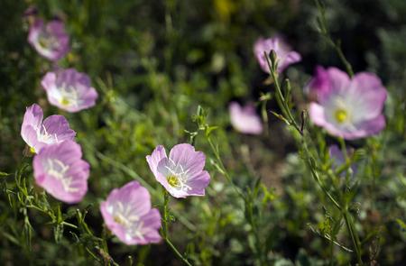 floret: floret Stock Photo