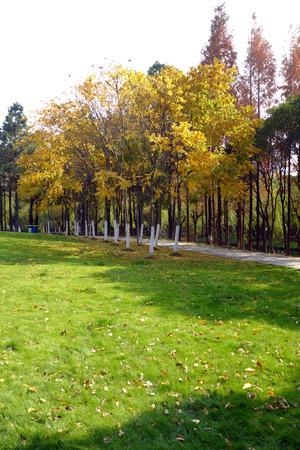 road autumnal: autumn scenery