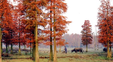 Autumn ploughing Editorial