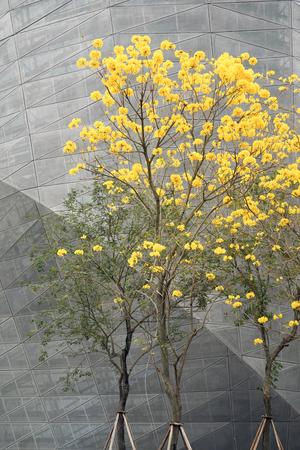 campanula: Day lily