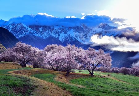 Linzhi の春