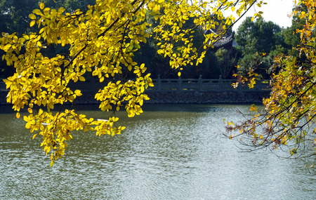 pond and autumn leaves Banque d'images