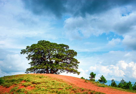 Landscape view of a tree on the mountain under the blue sky