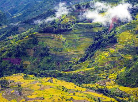Het landschap van het aardlandschap van terrassen Stockfoto