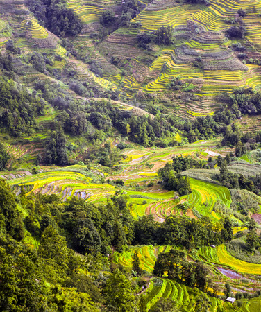 Nature landscape scenery view of terraces Stock Photo