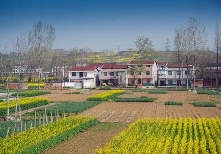 Hanzhoung rape flower field Фото со стока